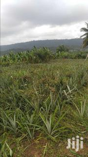 Pineapple Farm For Sale | Livestock & Poultry for sale in Eastern Region, Akuapim South Municipal