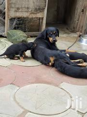 Baby Male Mixed Breed Rottweiler | Dogs & Puppies for sale in Greater Accra, Lartebiokorshie