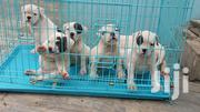 Cages For Ur Pets | Pet's Accessories for sale in Greater Accra, Kokomlemle