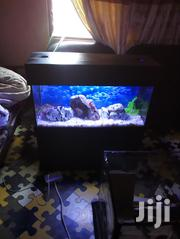 Aquarium With Fish | Fish for sale in Greater Accra, Ashaiman Municipal