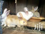 Rabbit | Livestock & Poultry for sale in Greater Accra, Ga South Municipal