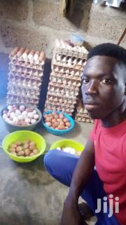 Poultry Farm Keeper | Farming & Veterinary CVs for sale in Central Region, Awutu-Senya