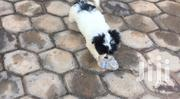 Baby Female Mixed Breed | Dogs & Puppies for sale in Greater Accra, Tema Metropolitan