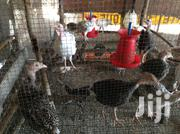 Healthy Local Turkeys | Livestock & Poultry for sale in Central Region, Cape Coast Metropolitan