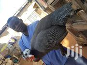 Day Old Guinea Fowl For Sale | Livestock & Poultry for sale in Ashanti, Kumasi Metropolitan