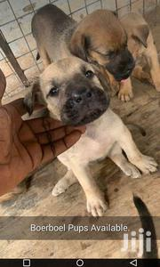 Boerboel And Dobberman | Dogs & Puppies for sale in Greater Accra, Kwashieman