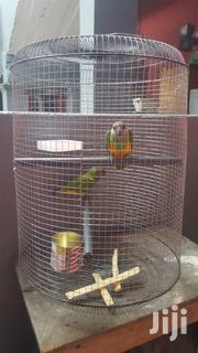Parrots For Sell | Birds for sale in Northern Region, West Mamprusi