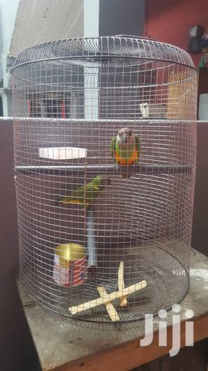 Parrots For Sell