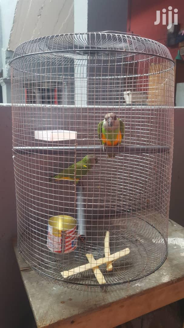 Archive: Parrots For Sell