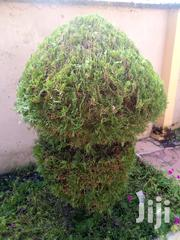 Ornamental Plants | Garden for sale in Western Region, Bibiani/Anhwiaso/Bekwai