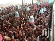 Chickens For Sale | Livestock & Poultry for sale in Ashanti, Kumasi Metropolitan