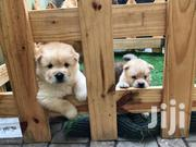 Baby Male Purebred Chow Chow | Dogs & Puppies for sale in Greater Accra, Tema Metropolitan