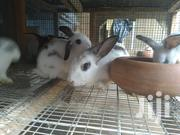 Rabbits For Meat And Breeding | Livestock & Poultry for sale in Greater Accra, Kwashieman