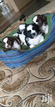 Baby Female Purebred Shih Tzu | Dogs & Puppies for sale in Greater Accra, Darkuman