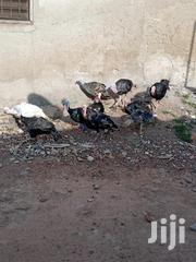 Local Turkeys | Livestock & Poultry for sale in Ashanti, Kumasi Metropolitan