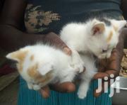 Baby Male Mixed Breed | Cats & Kittens for sale in Greater Accra, Ga West Municipal