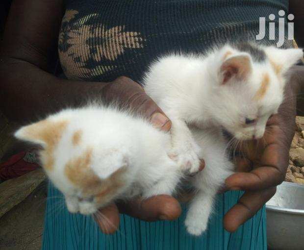 Archive: Baby Male Mixed Breed