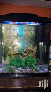 Aquarium With Live Fishes | Pet's Accessories for sale in Greater Accra, North Kaneshie