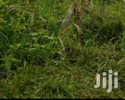 Acres of Farmlands at Adeisu   Land & Plots For Sale for sale in Greater Accra, Accra Metropolitan