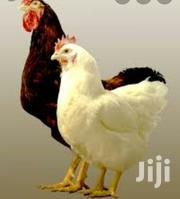 Fowls   Livestock & Poultry for sale in Greater Accra, Accra Metropolitan