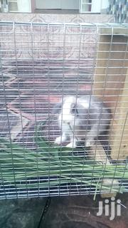 Pet Rabbits For Sale: Buy It For Your Child/Self | Other Animals for sale in Central Region, Awutu-Senya