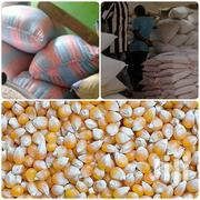 Maize In Large Quantities | Meals & Drinks for sale in Eastern Region, New-Juaben Municipal