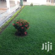 Lawns And Garden Services | Landscaping & Gardening Services for sale in Greater Accra, Accra Metropolitan