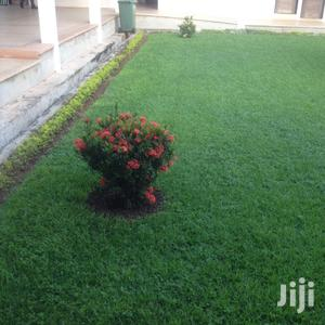 Lawns And Garden Services