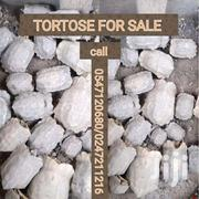 Tortose | Other Animals for sale in Ashanti, Asante Akim South