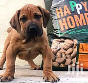 Happy Home Dog Feed | Pet's Accessories for sale in Central Region, Cape Coast Metropolitan