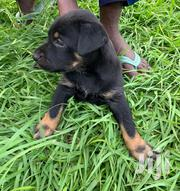 Baby Female Mixed Breed Rottweiler | Dogs & Puppies for sale in Greater Accra, Nungua East