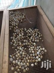 Fertile Quail Eggs At Afordable Price | Meals & Drinks for sale in Ashanti, Kumasi Metropolitan