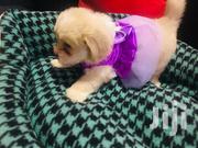 Baby Male Purebred Maltese | Dogs & Puppies for sale in Greater Accra, Osu