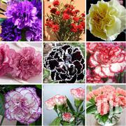 Ferry Morse Carnation Flower Seeds 100pcs | Feeds, Supplements & Seeds for sale in Greater Accra, Kwashieman