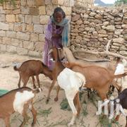 Animals Buying And Selling | Livestock & Poultry for sale in Northern Region, Nanumba South