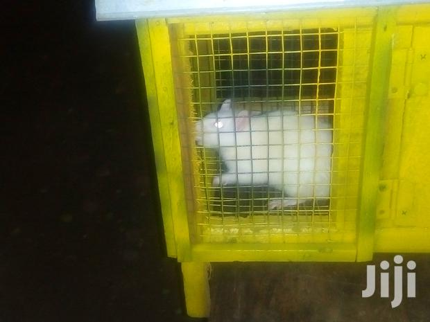 Archive: Pet Mouse With Cage For Sale