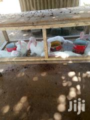 Rabbits and Rabbit Cages for Sale | Pet's Accessories for sale in Greater Accra, North Kaneshie