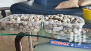 Organic Quail Eggs For Sale | Livestock & Poultry for sale in Greater Accra, Osu