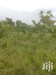 1000 Acres Of Land For Sale | Land & Plots For Sale for sale in Volta Region, Ho Municipal