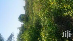 Litigation Free Land For Sale At Sansam Near Nsawam