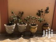 Pots For Sale | Garden for sale in Greater Accra, Dzorwulu