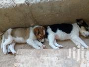 Baby Male Mixed Breed | Dogs & Puppies for sale in Greater Accra, Tema Metropolitan