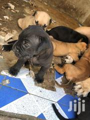 Wild Puppies | Dogs & Puppies for sale in Greater Accra, Ga East Municipal