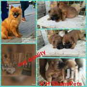 Imported Top Pedigree Chines Chowchow | Dogs & Puppies for sale in Western Region, Shama Ahanta East Metropolitan