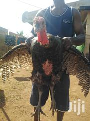 Turkey For Xmas Sales | Livestock & Poultry for sale in Greater Accra, Accra Metropolitan