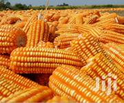 Maize For Sale | Feeds, Supplements & Seeds for sale in Brong Ahafo, Tain