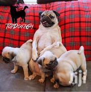 Pug Puppies For Sale | Dogs & Puppies for sale in Greater Accra, Tema Metropolitan