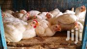 Poultry Birds For Sale | Livestock & Poultry for sale in Greater Accra, Ashaiman Municipal