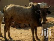 Healthy Cow | Other Animals for sale in Greater Accra, Ashaiman Municipal