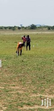 Tsopoli Plots Of Land For Sale | Land & Plots For Sale for sale in Greater Accra, Tema Metropolitan